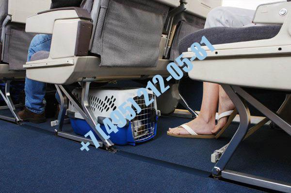 Документы для перевозки собаки в салоне самолета - купить в Москве